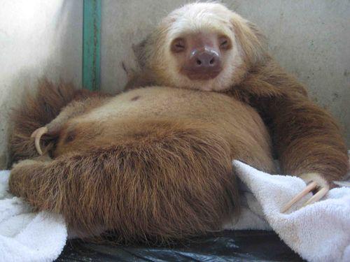Fat Sloth Fitness